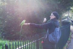 Женщина делая фото зеленого длиннохвостого попугая на Гайд-парке в Лондоне на солнечный день Стоковое Фото