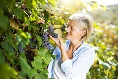 женщина жать виноградин Стоковые Изображения