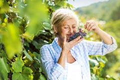женщина жать виноградин Стоковая Фотография