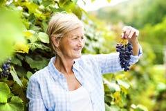 женщина жать виноградин Стоковое фото RF