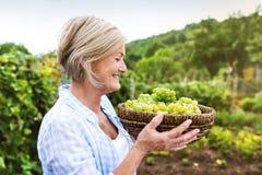 женщина жать виноградин Стоковые Фото