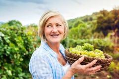 женщина жать виноградин Стоковое Изображение RF