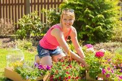 Женщина засаживая розы в саде стоковое изображение rf