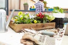 Женщина засаживая сад крыши Стоковая Фотография RF
