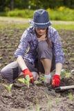 Женщина засаживая wegetables Стоковые Фото