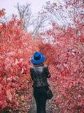 Женщина идет в красные деревья стоковая фотография rf