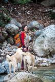 Женщина идет с 2 кавказскими собаками чабана в лесе стоковые изображения rf