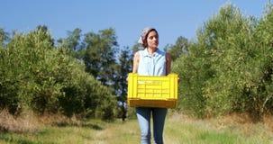 Женщина идя с сжатыми оливками в клети 4k сток-видео