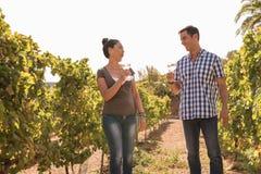 Женщина и вино человека выпивая в винограднике Стоковое Фото