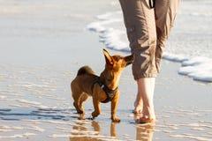 Женщина и ее милая маленькая собака идя для того чтобы накренить на пляже стоковое изображение rf