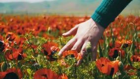 Женщина идет на мак поля среди цвести красные маки