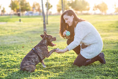 Женщина и собака тряся руку и лапку Стоковая Фотография