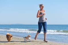 Женщина и собаки на пляже Стоковое фото RF