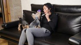Женщина и 2 собаки любимчиков акции видеоматериалы