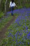 Женщина идя в древесины Bluebell Стоковое Фото