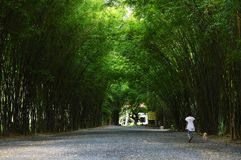Женщина идя с собакой в бамбуковый тоннель Стоковая Фотография RF