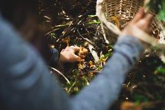 Женщина комплектуя желтый гриб ноги с корзиной стоковые фотографии rf