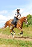 женщина красного цвета horsebak лошади каштана galloping Стоковые Изображения