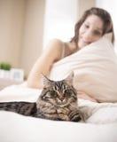 женщина Мейна енота кота серебряная Стоковое фото RF