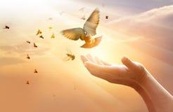 Женщина моля и освобождает птиц на предпосылке захода солнца стоковое изображение rf