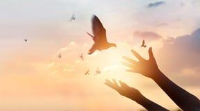Женщина моля и освобождает птиц летая на предпосылку захода солнца Стоковая Фотография