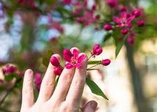 Женщина наслаждается красивыми цветками в парке около дерева Стоковое Фото