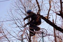 Женщина наслаждаясь деятельностью в парке веревочки стоковое фото