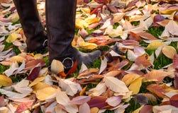 Женщина наслаждаясь листьями падения стоковое фото rf