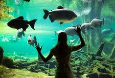 Женщина на oceanarium Стоковое Изображение