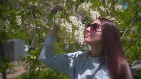 Женщина нежно касается и обнюхивается белой акации Красивая женщина в солнечных очках и красивой пахнуть акации акции видеоматериалы