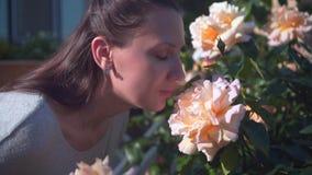 Женщина нежно касается и обнюхивается розам персика Красивая женщина и огромные персик-пахнуть розы видеоматериал