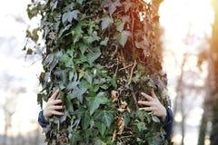 Женщина обнимая дерево Природа влюбленности и концепция экологичности Стоковая Фотография