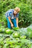Женщина около кроватей капусты Стоковая Фотография