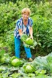 Женщина около кроватей капусты Стоковые Изображения
