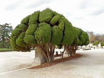 Женщина ослабляя под впечатляющими деревьями в Parque del Buen Retiro или парке приятного отступления в Мадриде Испании стоковые изображения rf