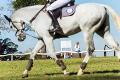 Женщина лошади всадника серая Стоковые Изображения RF