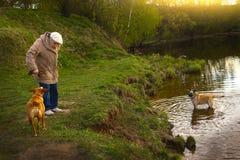 Женщина пенсионера с собакой в парке Стоковое Изображение RF