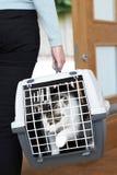 Женщина принимая кота любимчика к ветеринару в несущей Стоковые Изображения