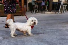 Женщина при собака идя на улицу Стоковые Фотографии RF