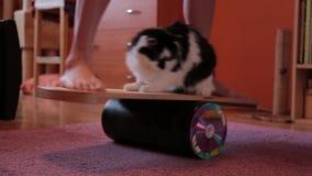 Женщина пробует держать баланс на доске с котом Ноги на доске баланса сток-видео