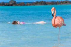Женщина плавая на заднюю часть в пляже фламинго искусственного Стоковые Фотографии RF