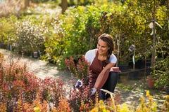 Женщина работая в садовом центре стоковая фотография rf