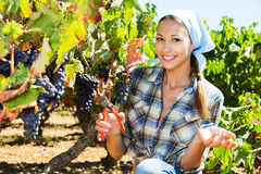 Женщина работая на дворе винодельни стоковое фото rf