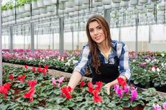 Женщина работая с цветками Стоковые Фотографии RF