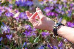 Женщина размышляя в представлении йоги на лужайку с крокусами Стоковая Фотография