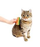 Женщина расчесывая кота tabby Стоковые Изображения RF