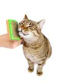 Женщина расчесывая кота tabby Стоковая Фотография