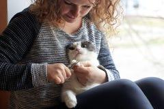 Женщина режет когти кота с ножницами ногтя, заботы любимца стоковое фото