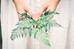 Женщина рук держа зеленые листья папоротника Стоковые Изображения