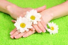 женщина рук s цветков Стоковые Фотографии RF